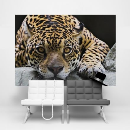 Wild cat Jaguar wallpaper mural for wall - S